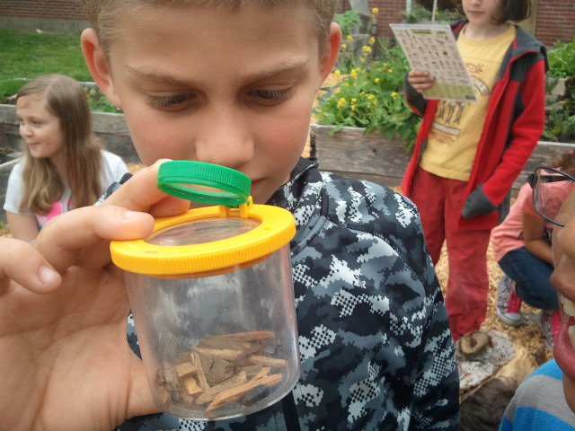 http://schoolgardenproject.org/wp-content/uploads/2016/03/Bug-catcher.jpg